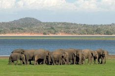 Voyage Sri Lanka