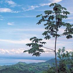 découverte-costa-rica