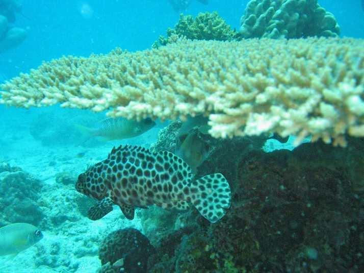 plongee-thailande